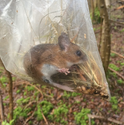 mouse-image-biome-research.jpg