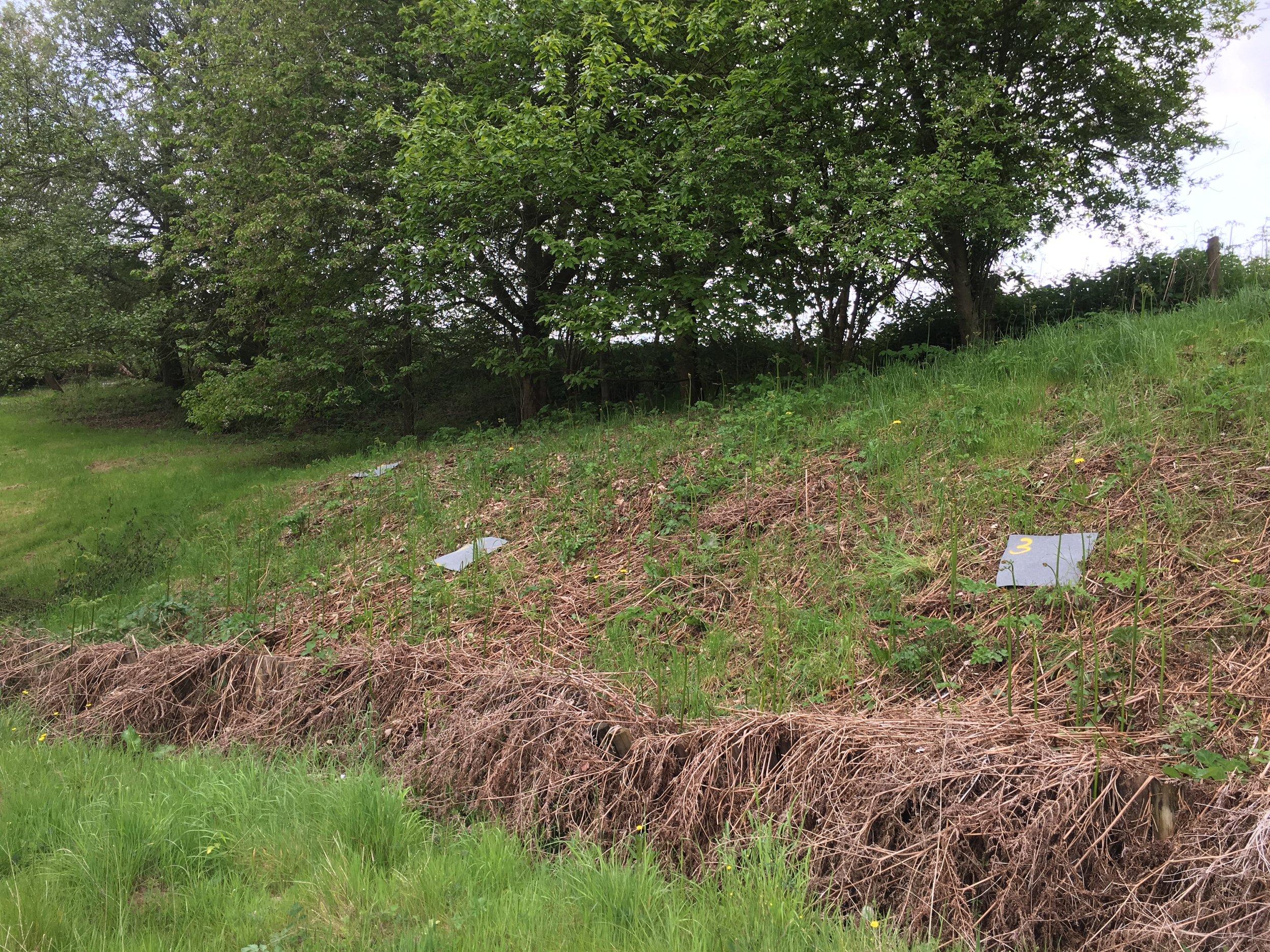 Reptile survey in Shropshire