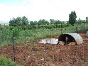 Piggery and Demonstration Gardens
