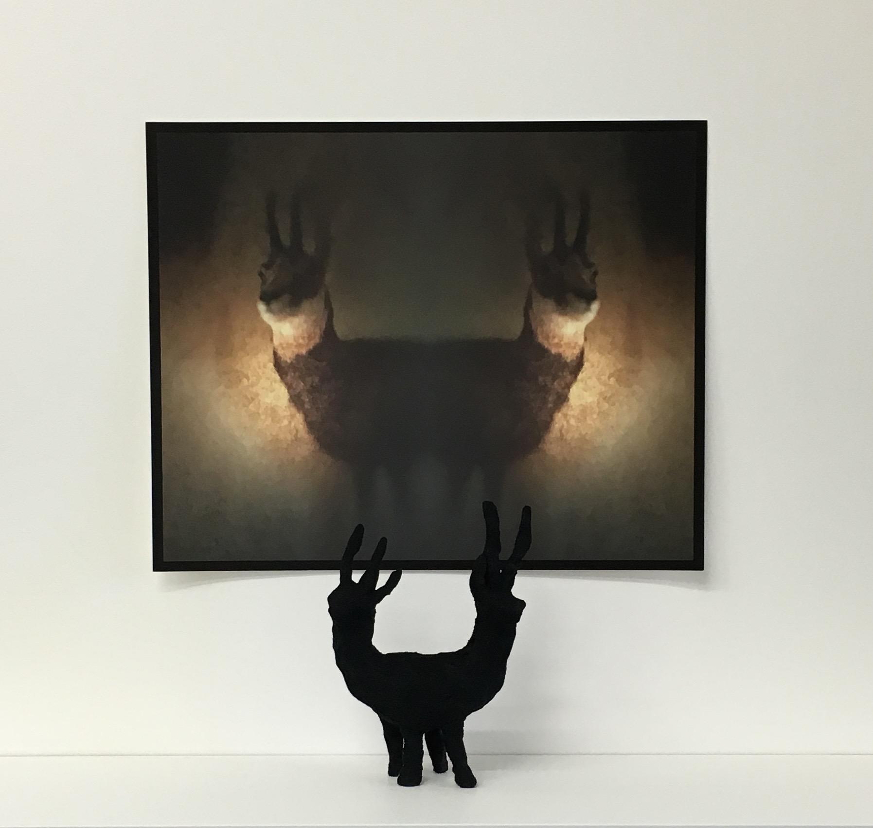 Antelope Two Ways,  2016, photographic image on german etching paper, 40 cm x 54 cm, raku clay, flocking.