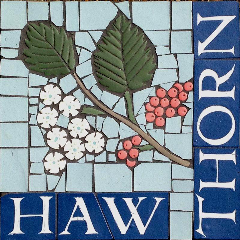 PS Hawthorn.JPG