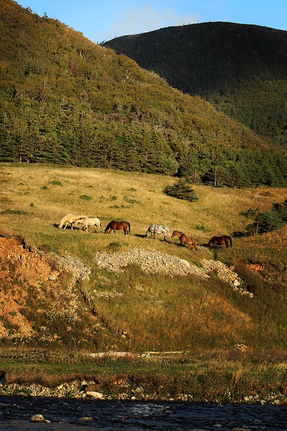 Horses of Polletts Cove web.jpg
