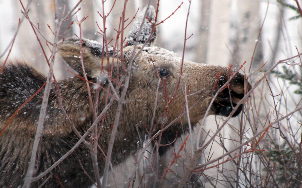 Wildlife Carousel 5.jpg