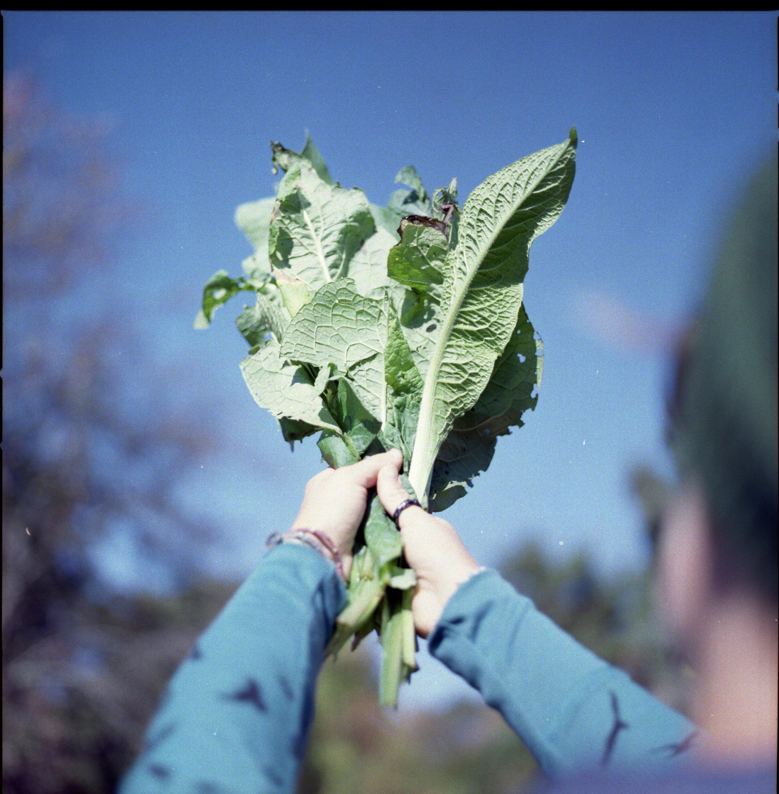 VEG_HerbalismOct26.Roll2_009.jpg