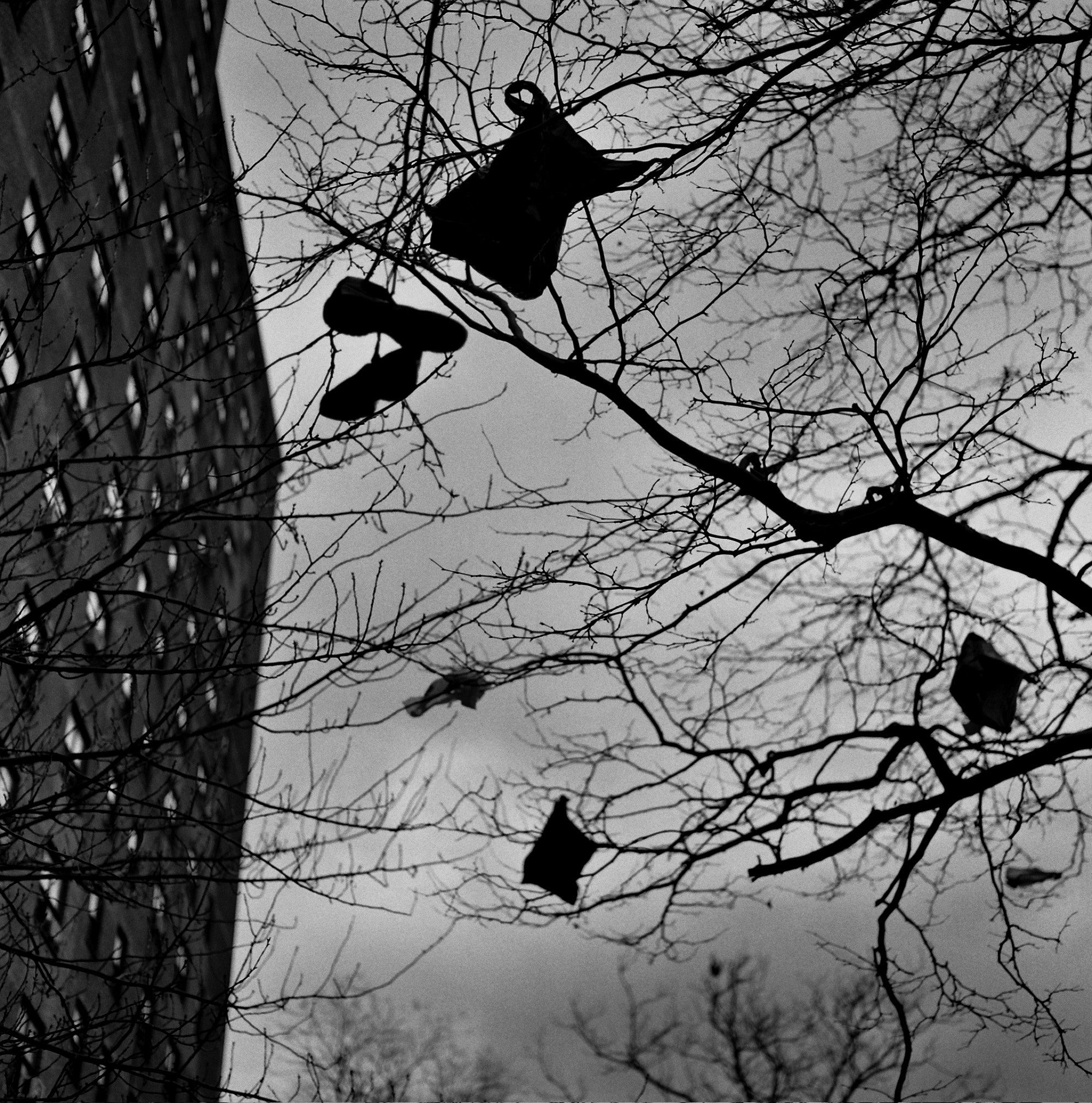 © Whitney Conti NYC