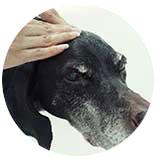 senior_dog.jpg