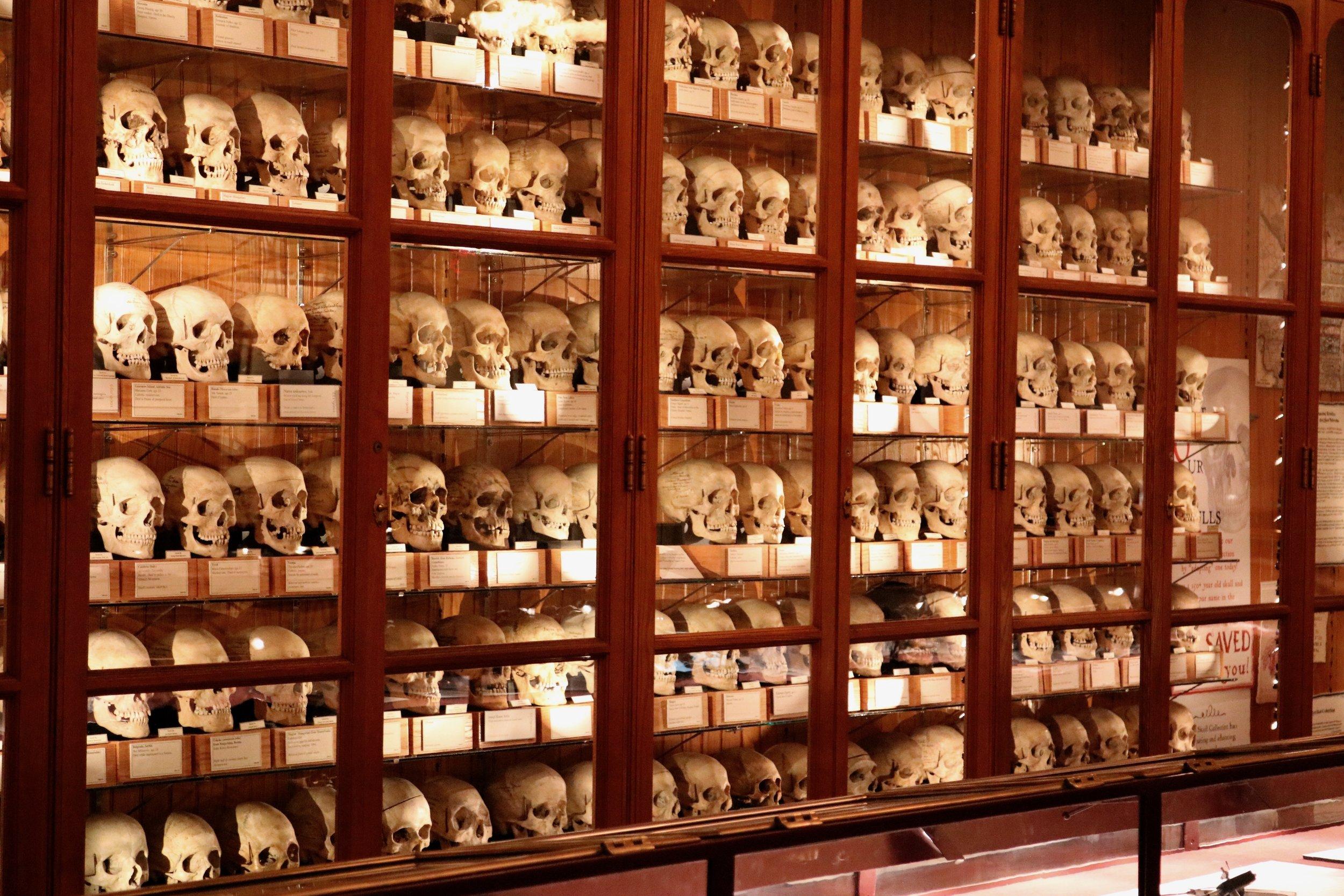 Hyrtl Skull Collection1.jpg
