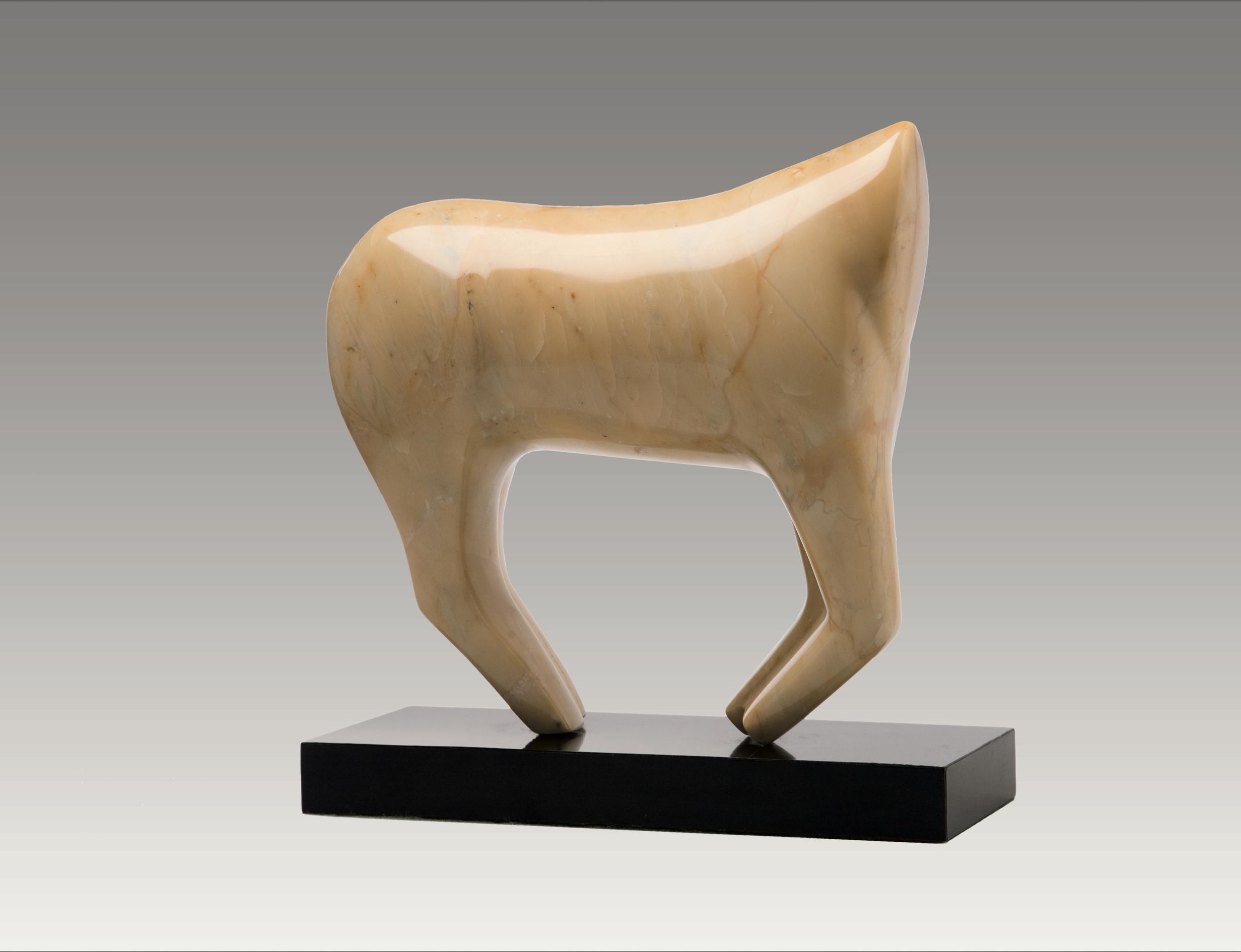 Horse Torso
