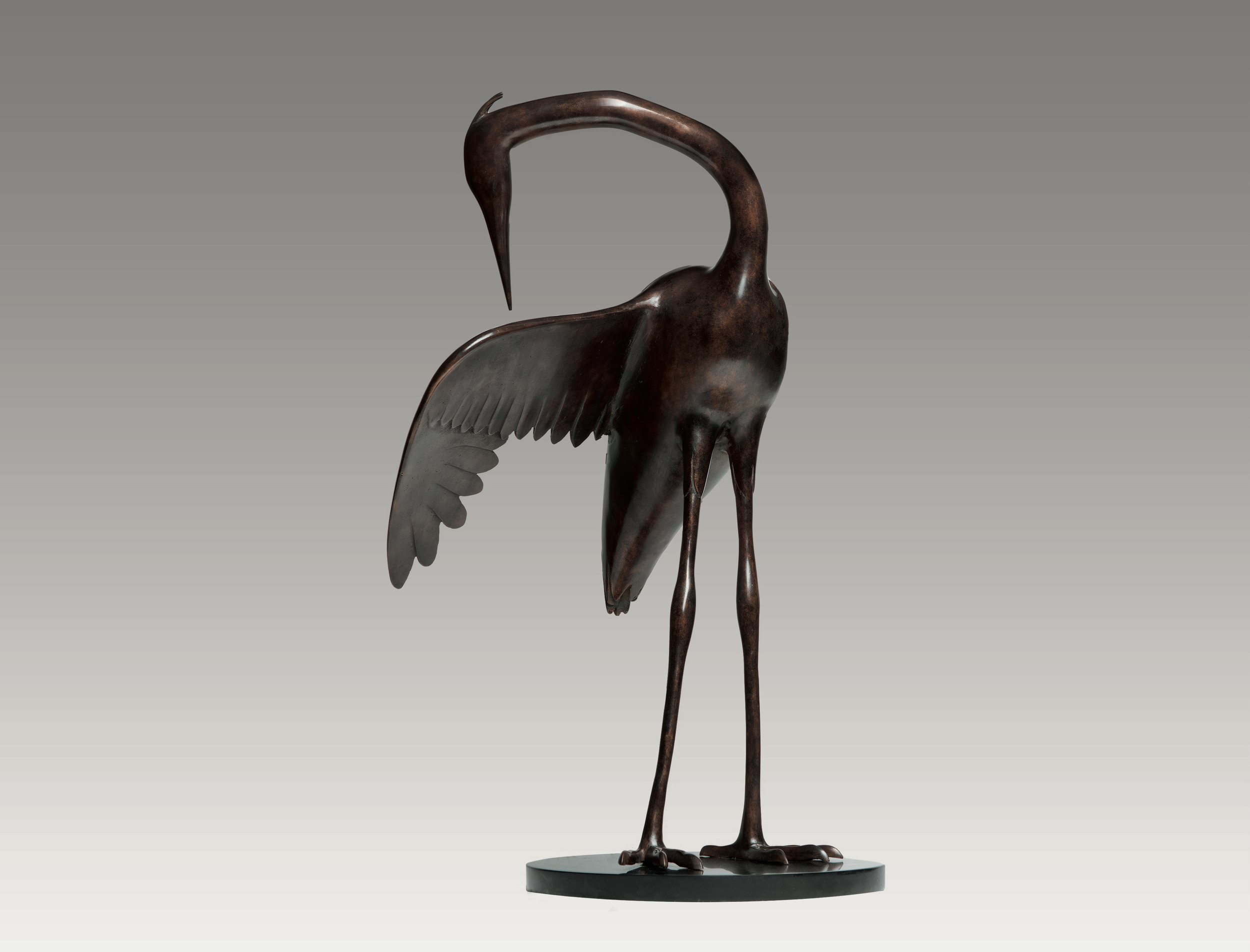 Heron Preening