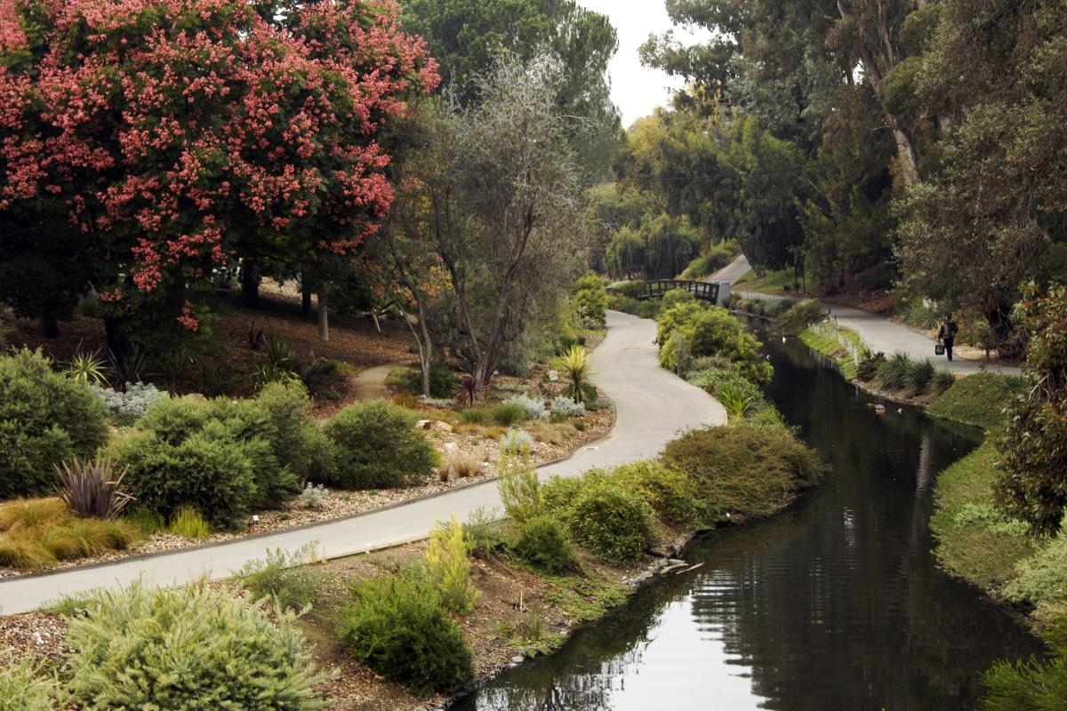 Photo credit  UC Davis Arboretum