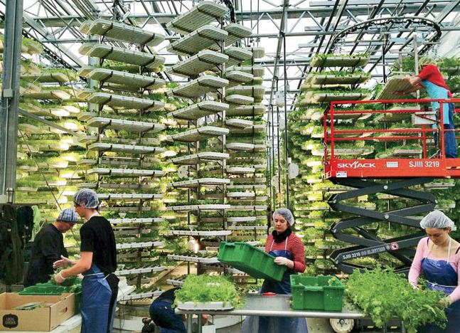 Vertical farming deployed ( source ).