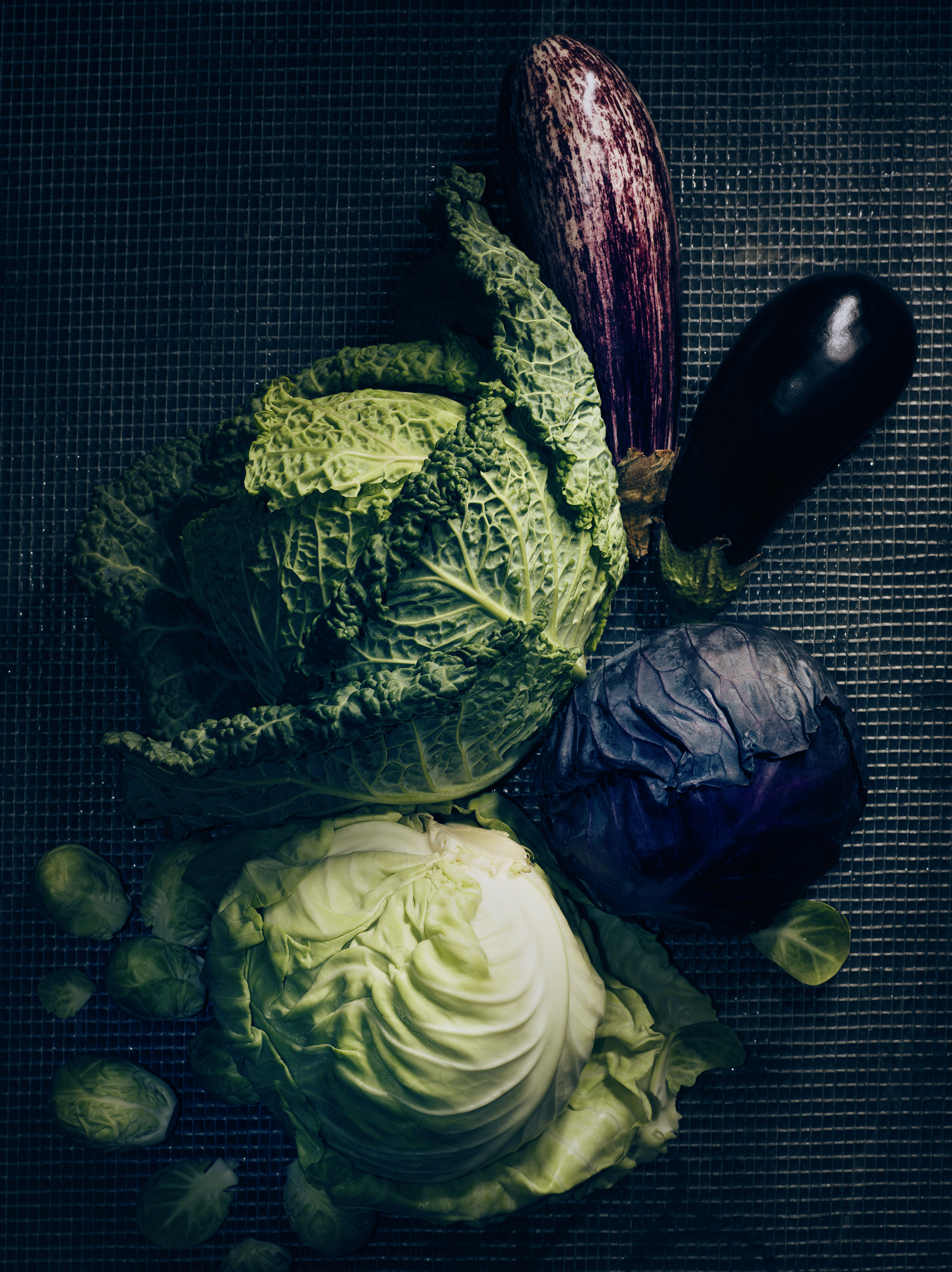 Cabbage fall vegetable photography