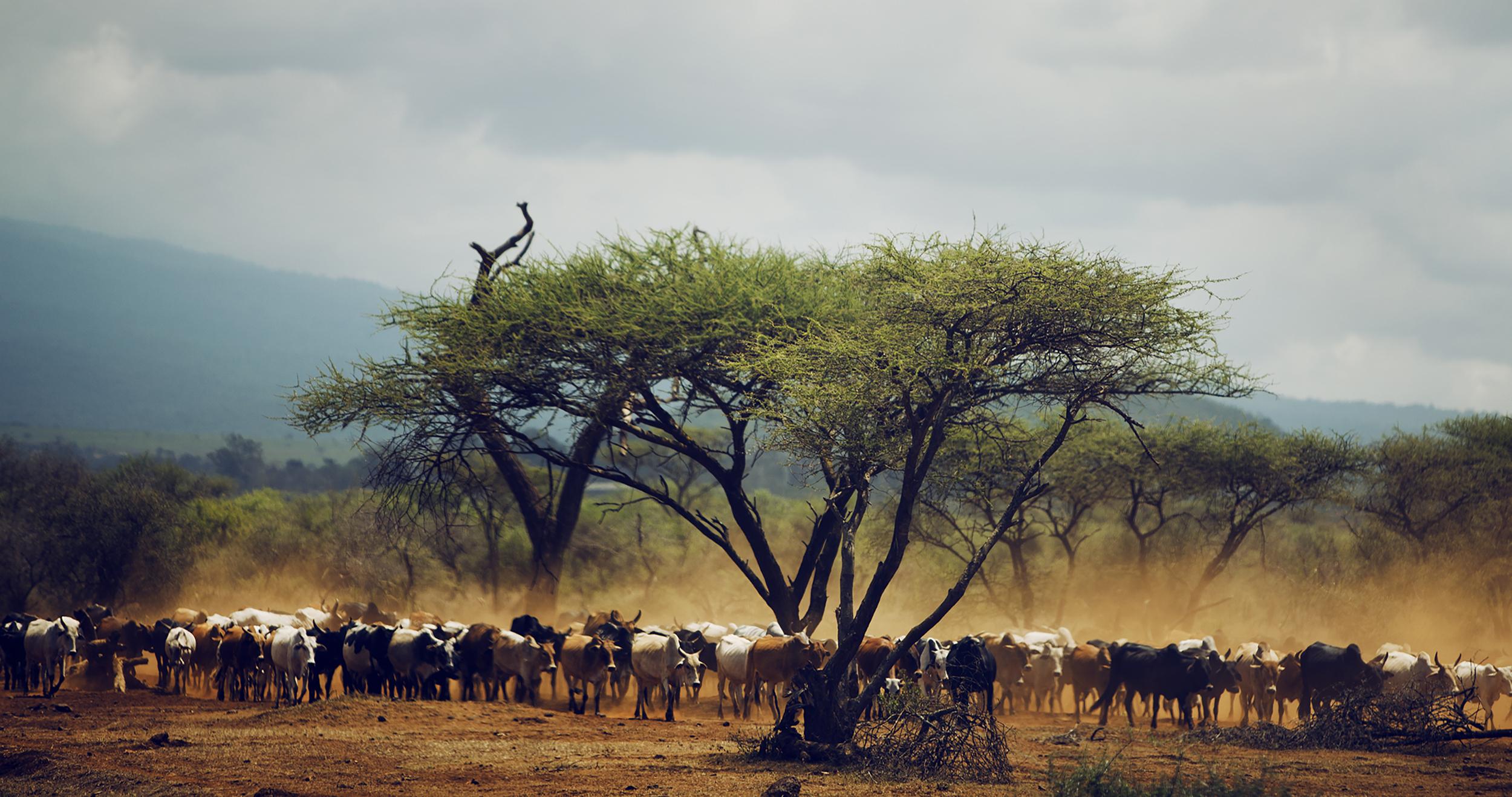 Wildlife01.jpg