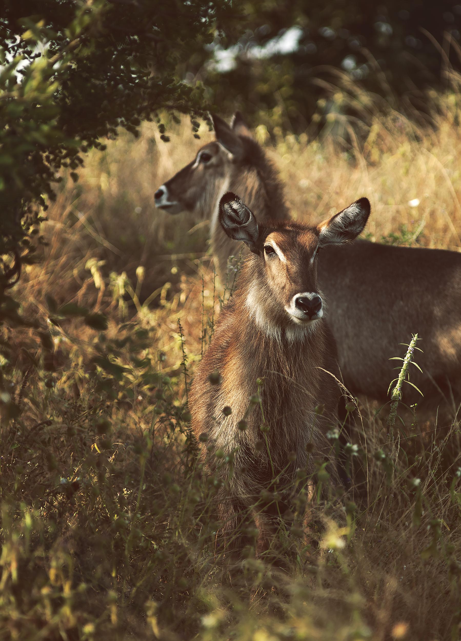 Wildlife06.jpg