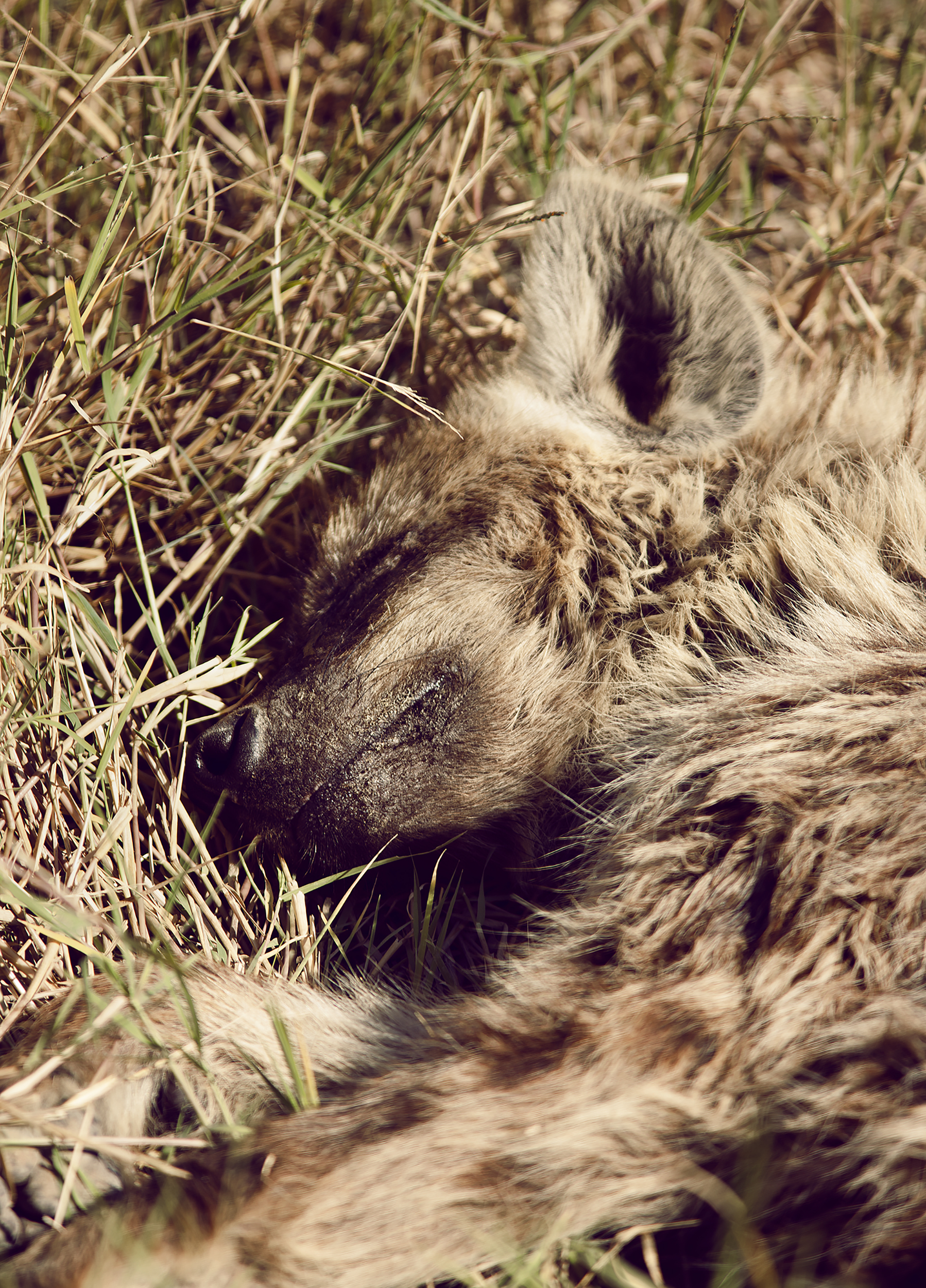 Wildlife05.jpg