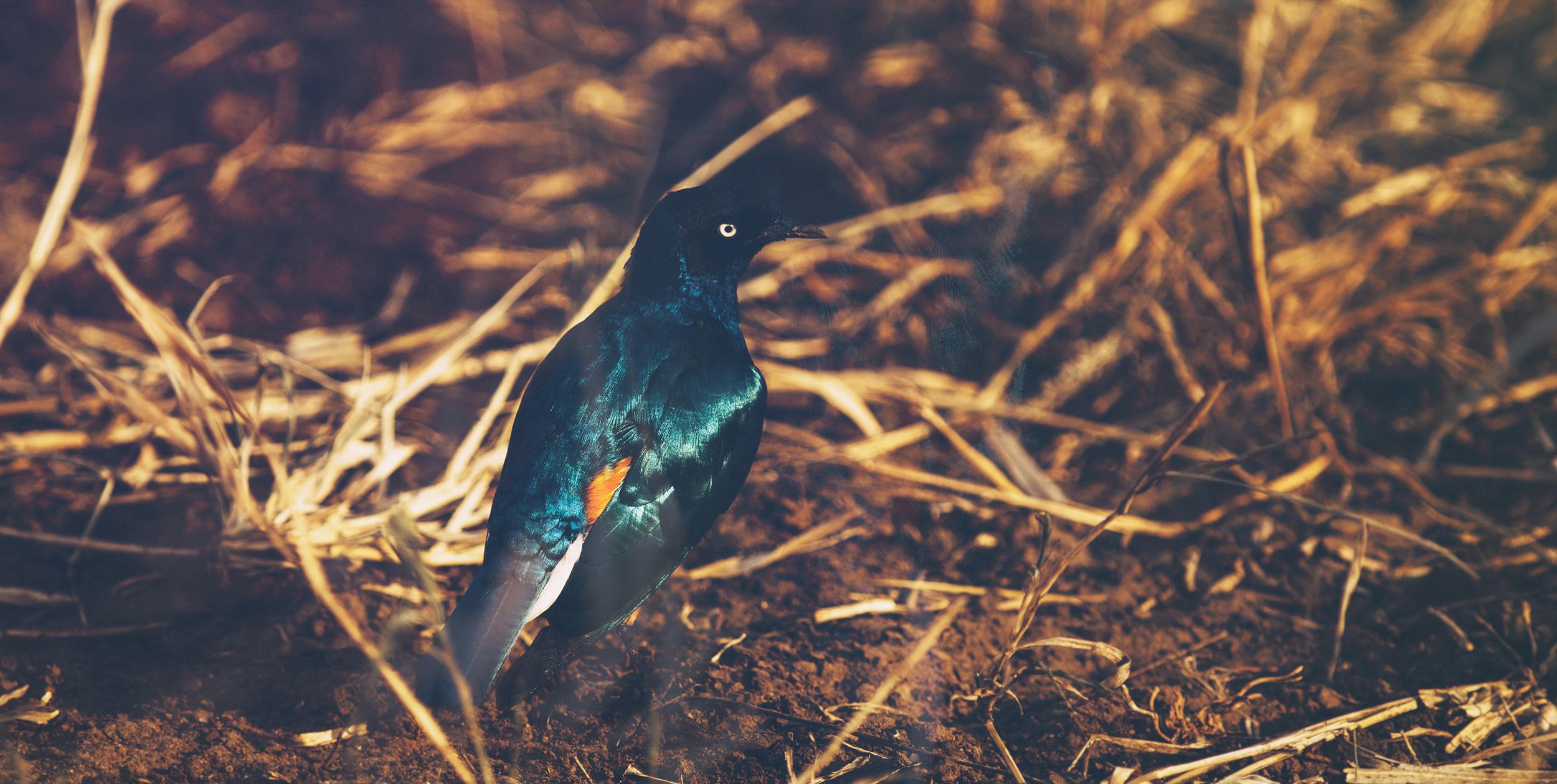 Wildlife07.jpg