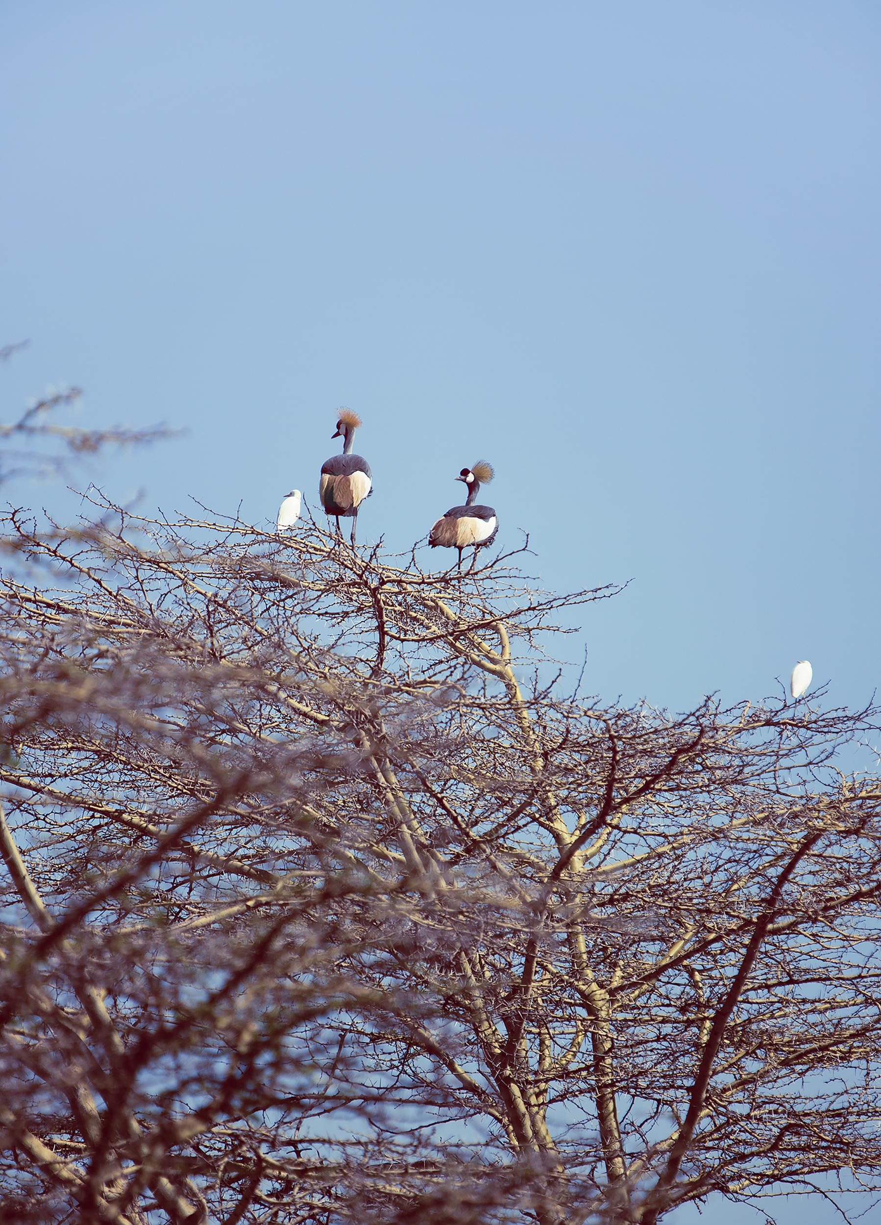 Wildlife09.jpg