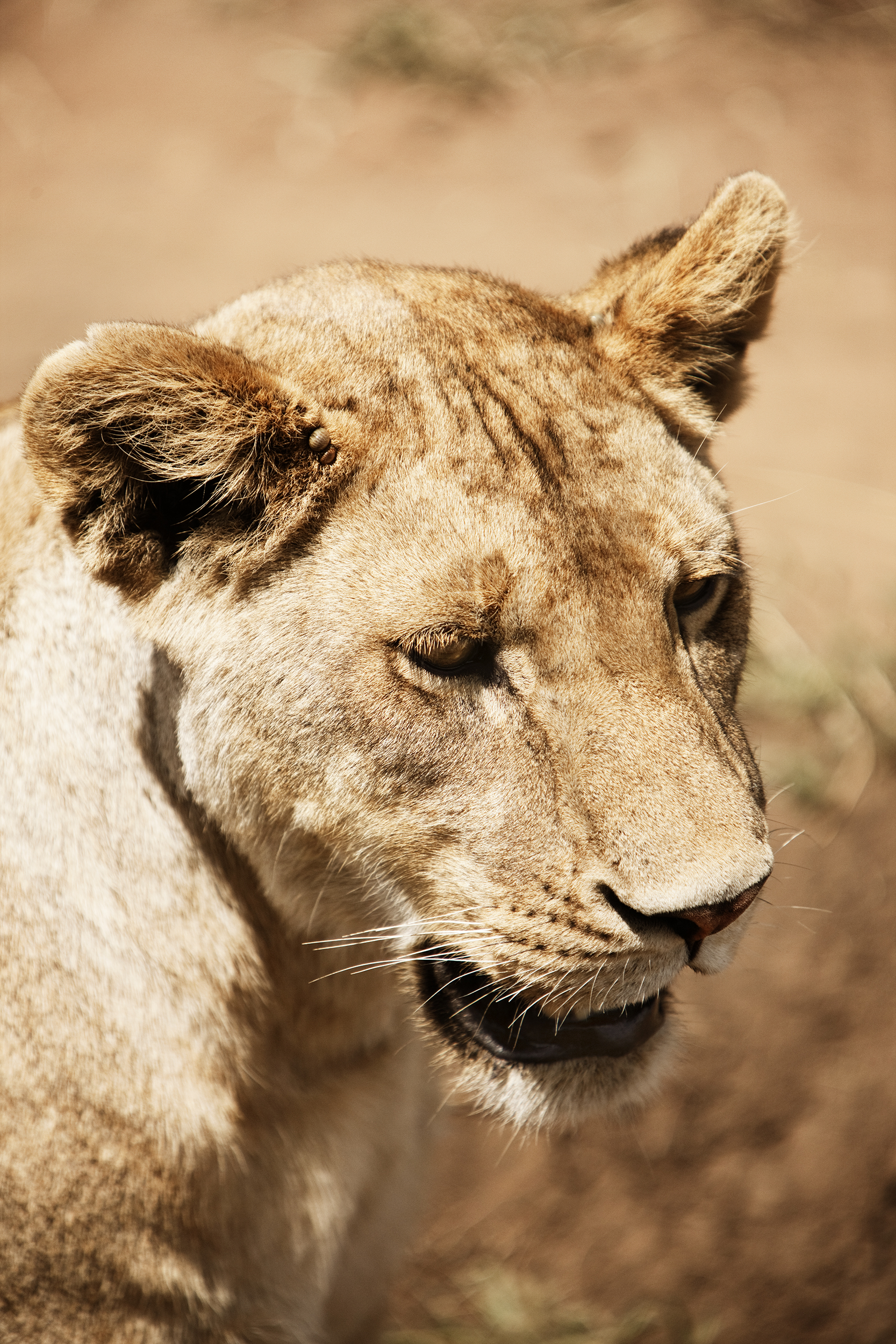 Wildlife12.jpg