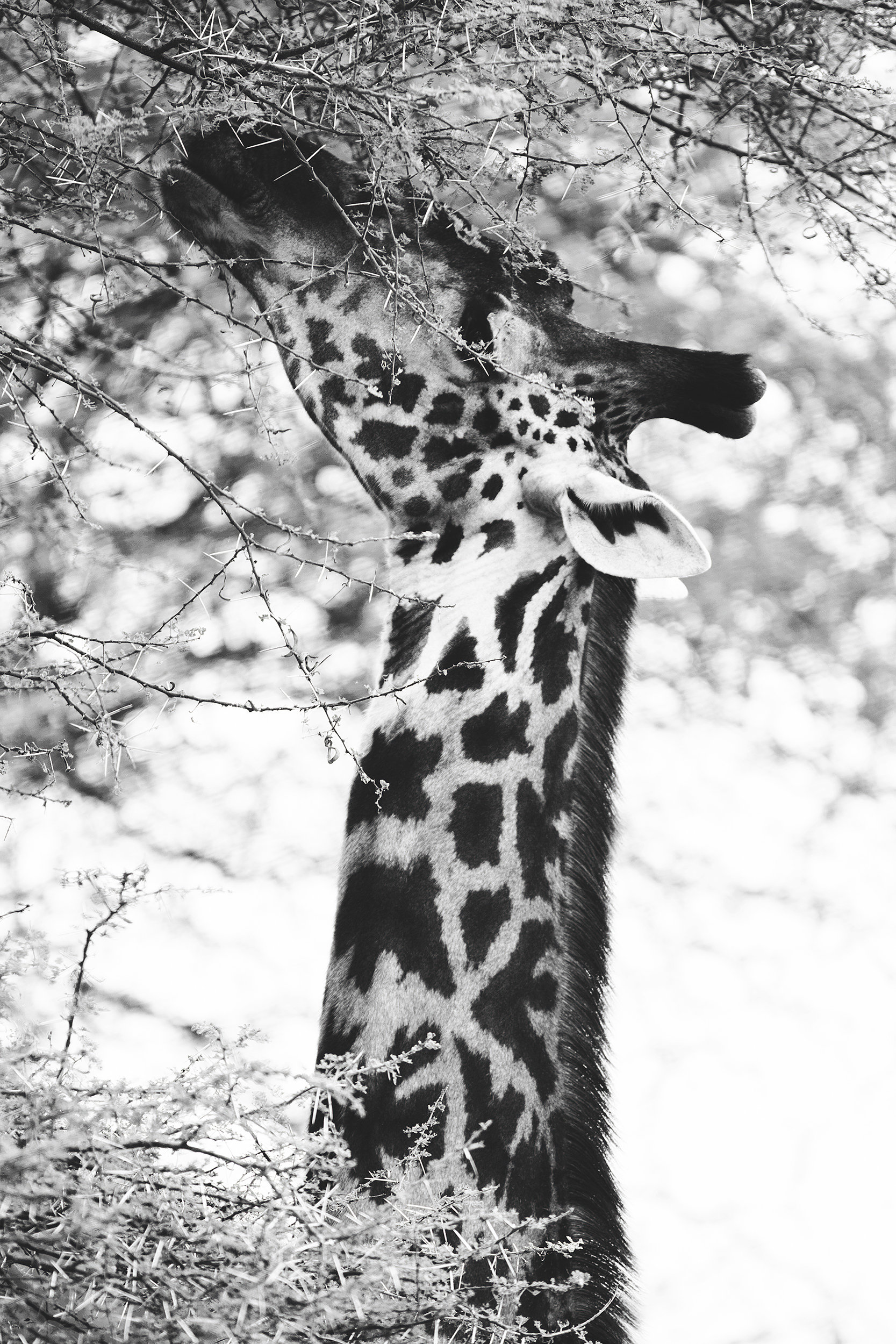 Wildlife15.jpg