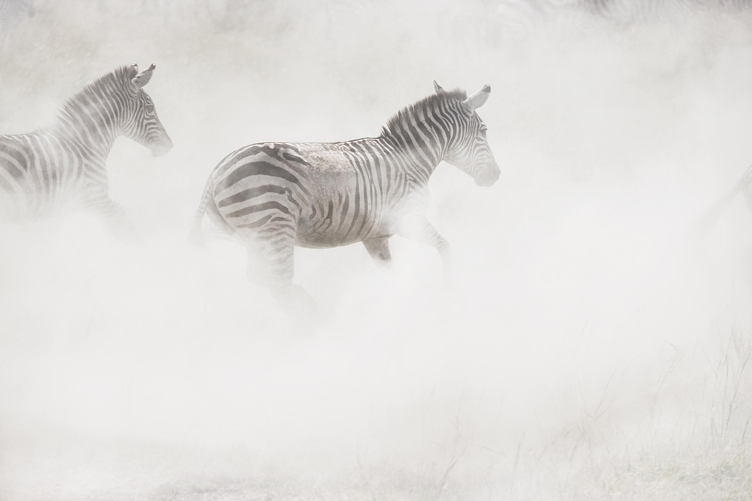 Wildlife22.jpg