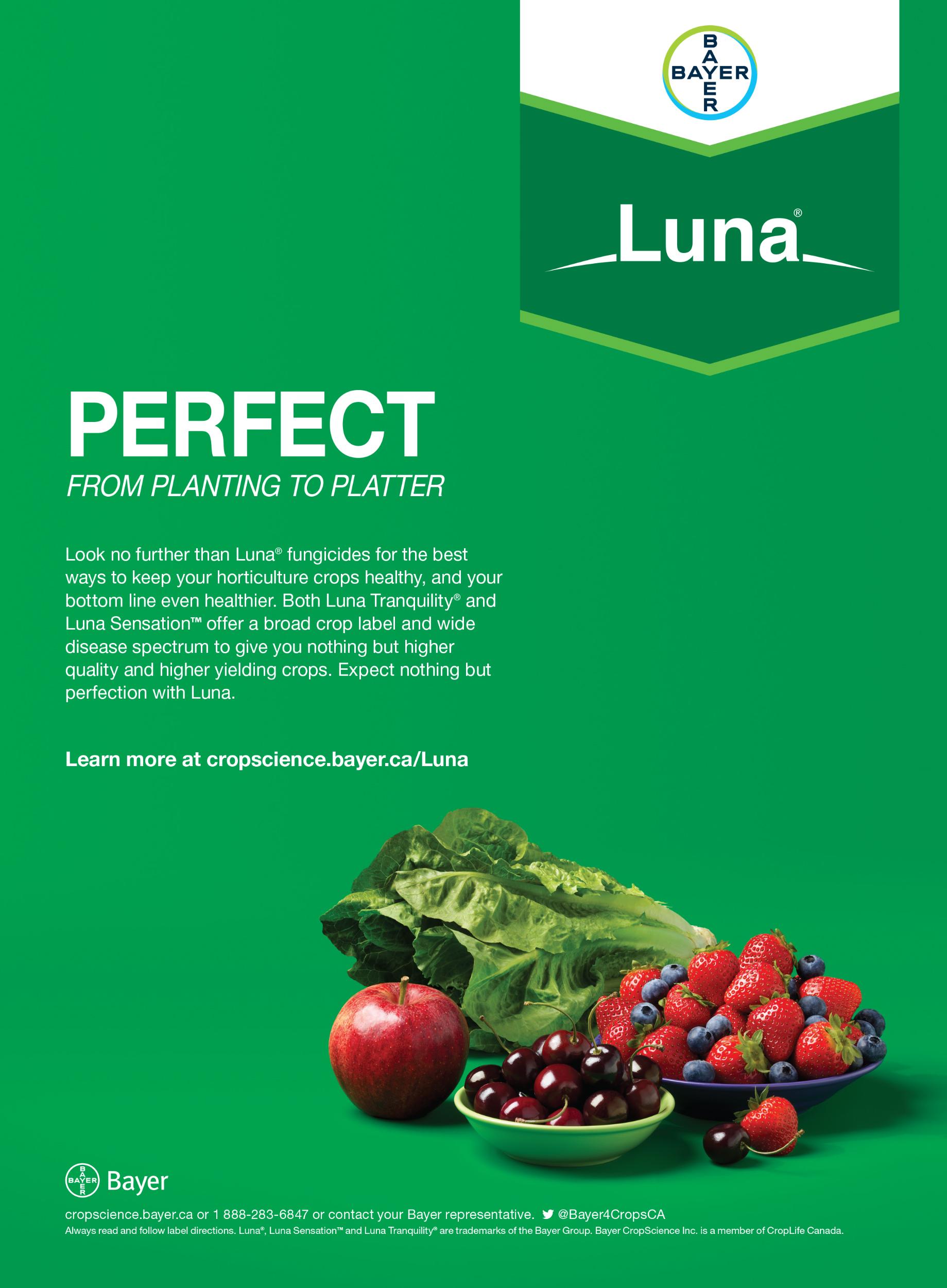 Luna Brand Launch Print - All Crops.jpg