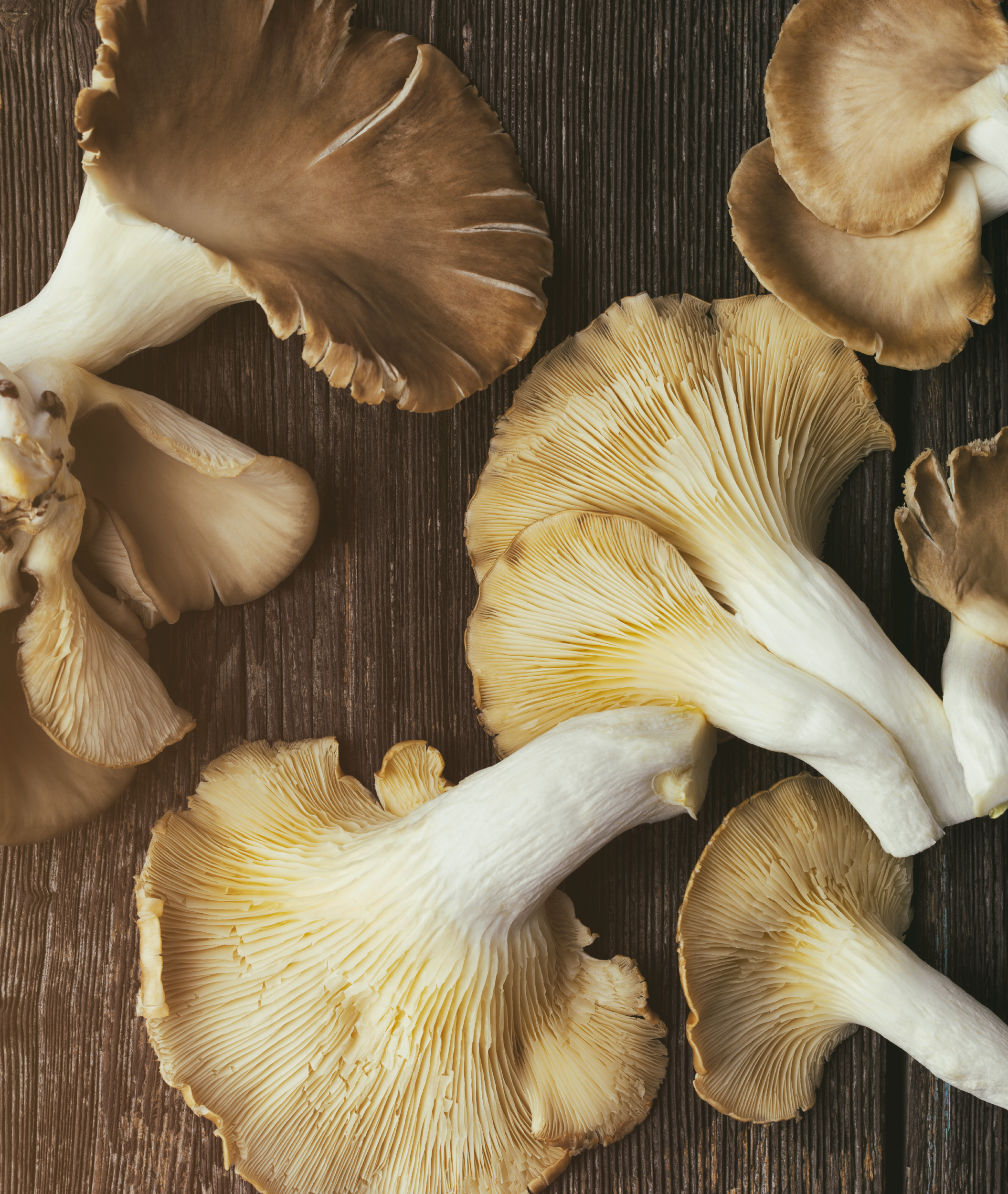 CL16046_MushroomOverhead 2_0048_2.jpg