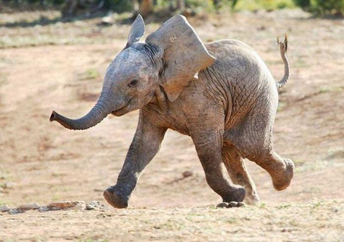 smile elephant babe.jpg