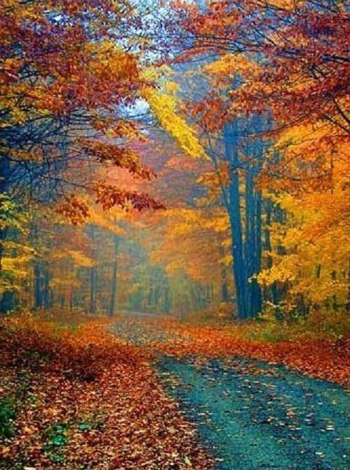 Falling Leaves 4.jpg
