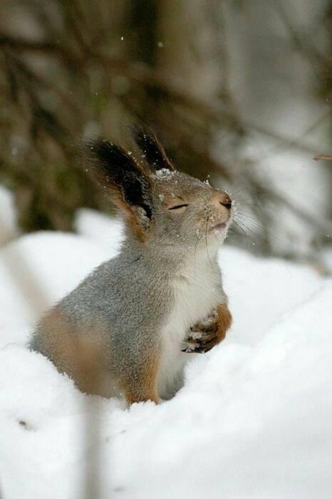 Rabbit Meditation.jpg