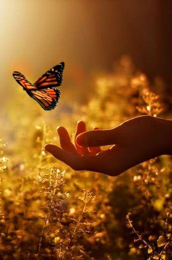 Butterfly Let Go.jpg