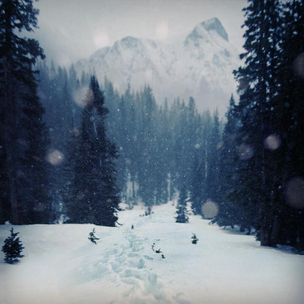 AlpinePursuit_FINAL.jpg
