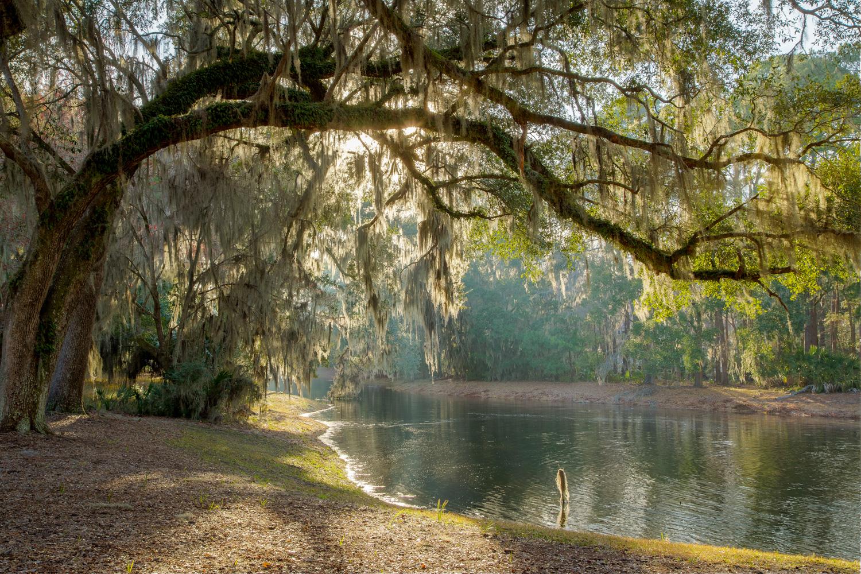 020 pond-PS1.jpg