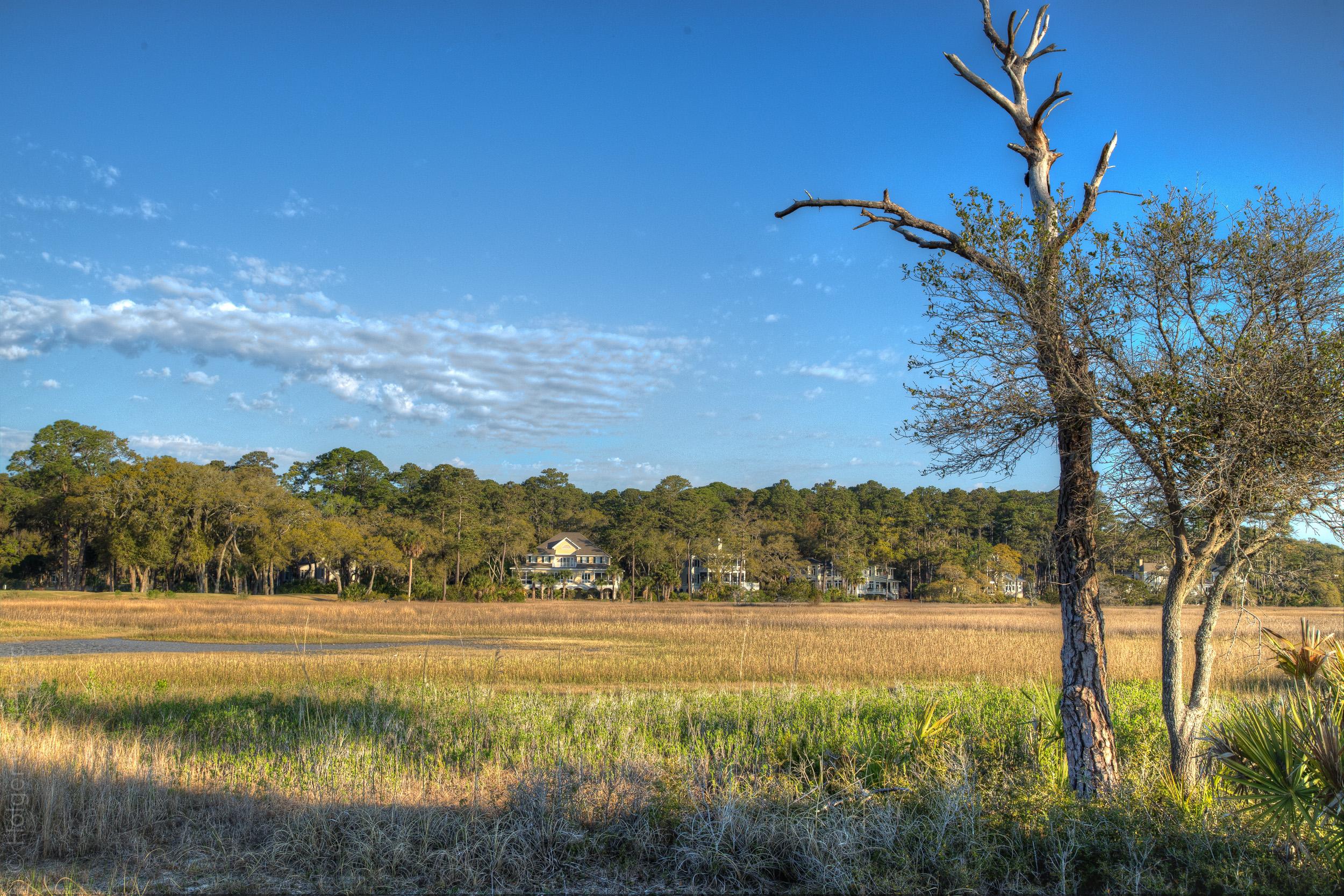 marsh-tree.jpg