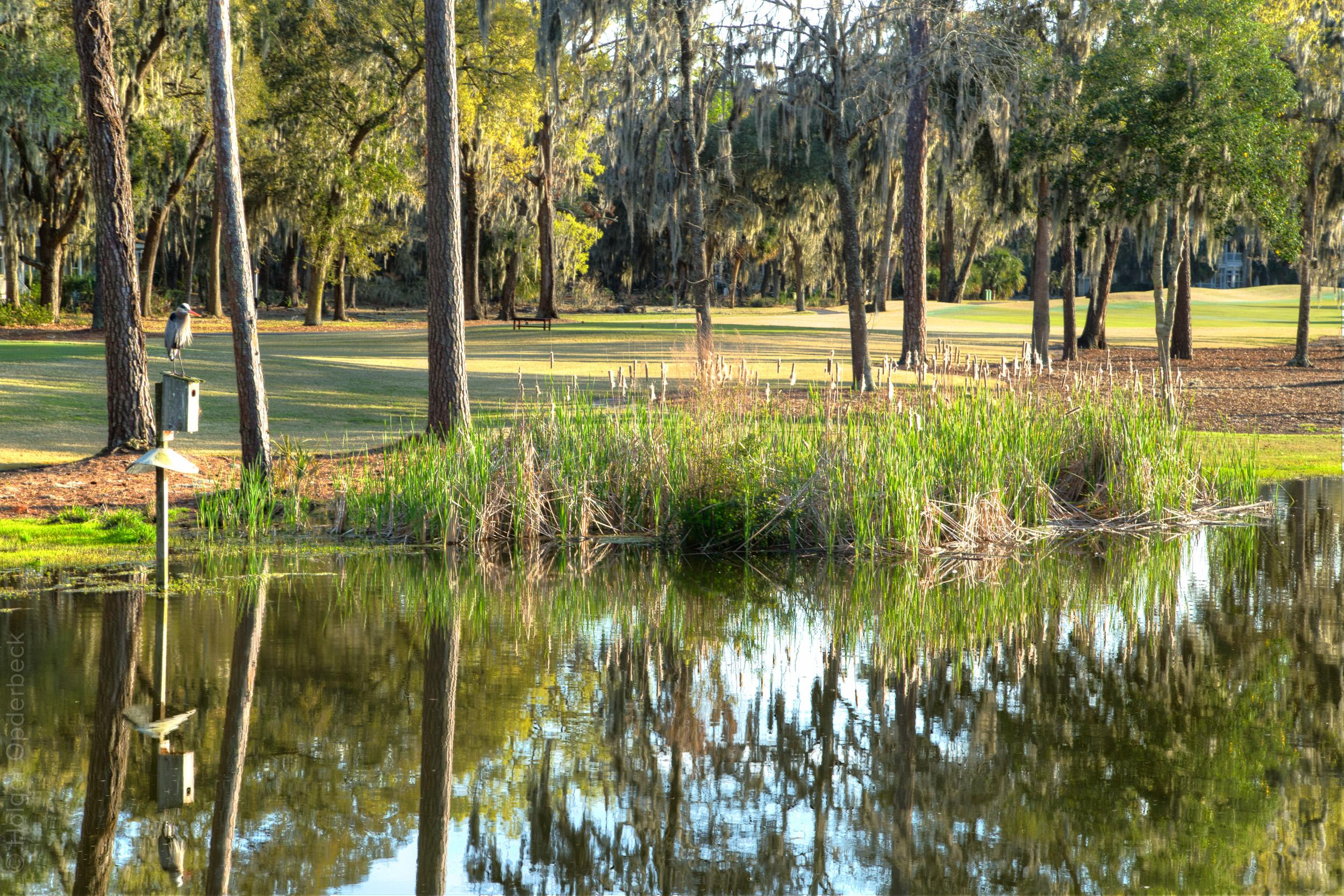 clubhouse-pond-grasses-bird-PS2.jpg
