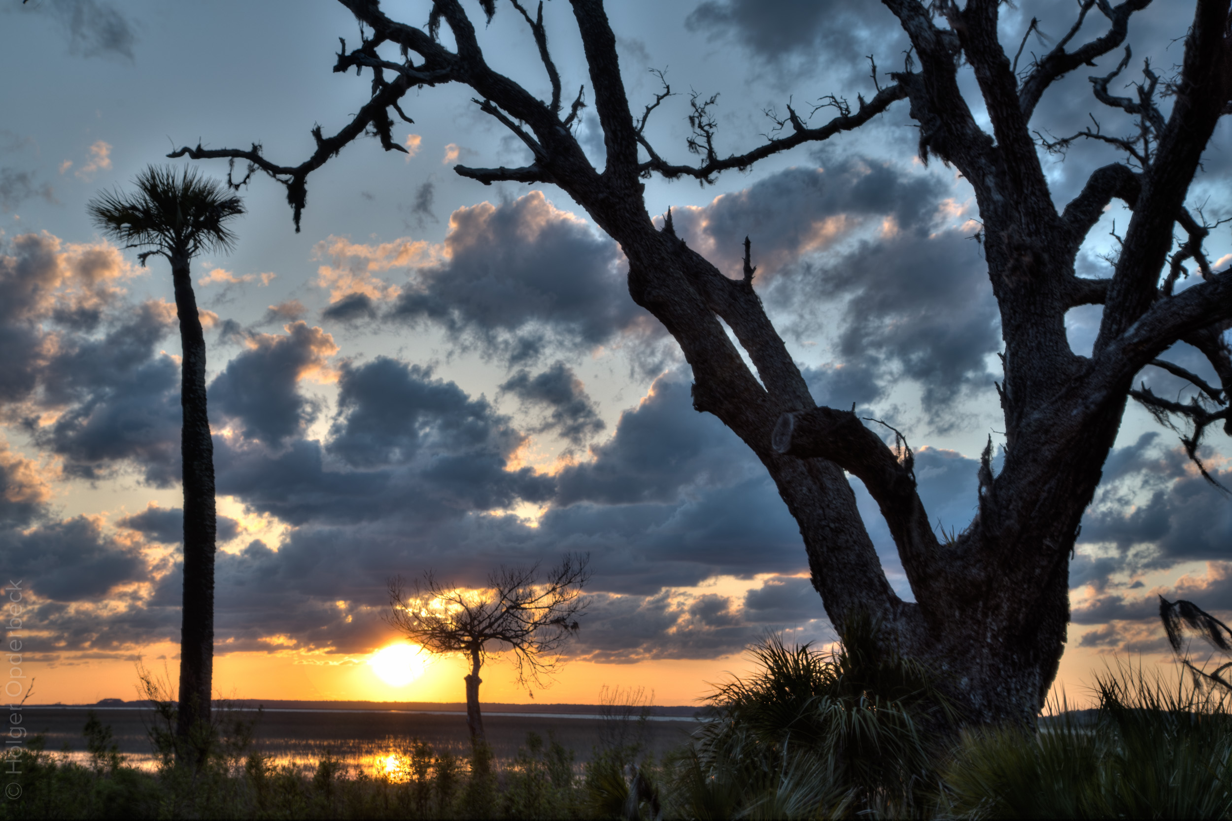mobius-sunset-dead-tree-palm.jpg