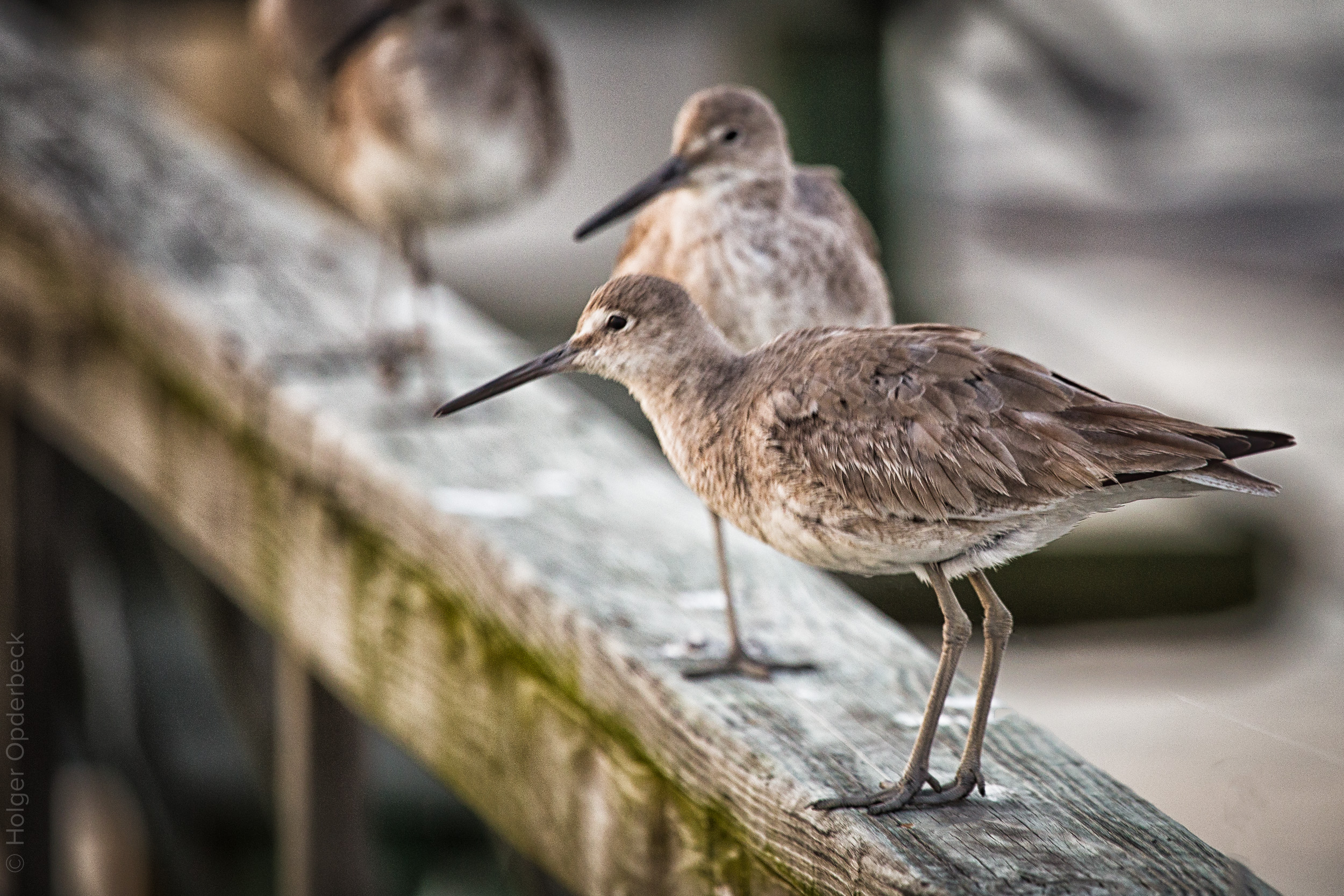 040 two-birds-on-handrail.jpg