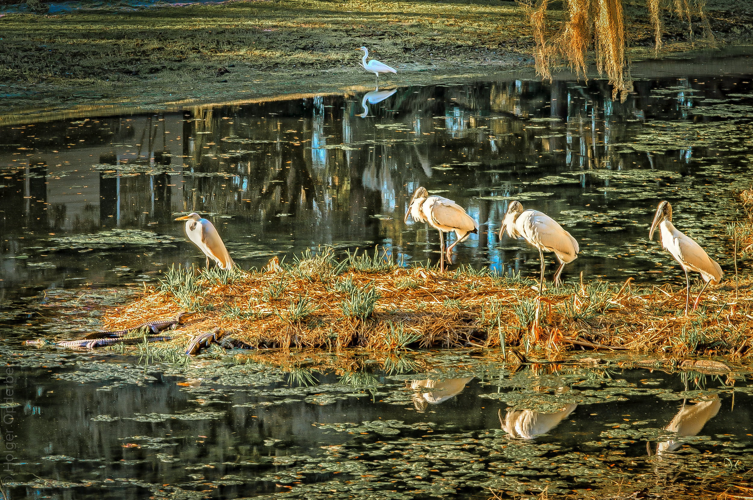 030 five-birds-three-alligators-PS.jpg