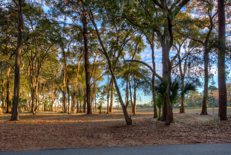 030 tree-view-PS1.jpg