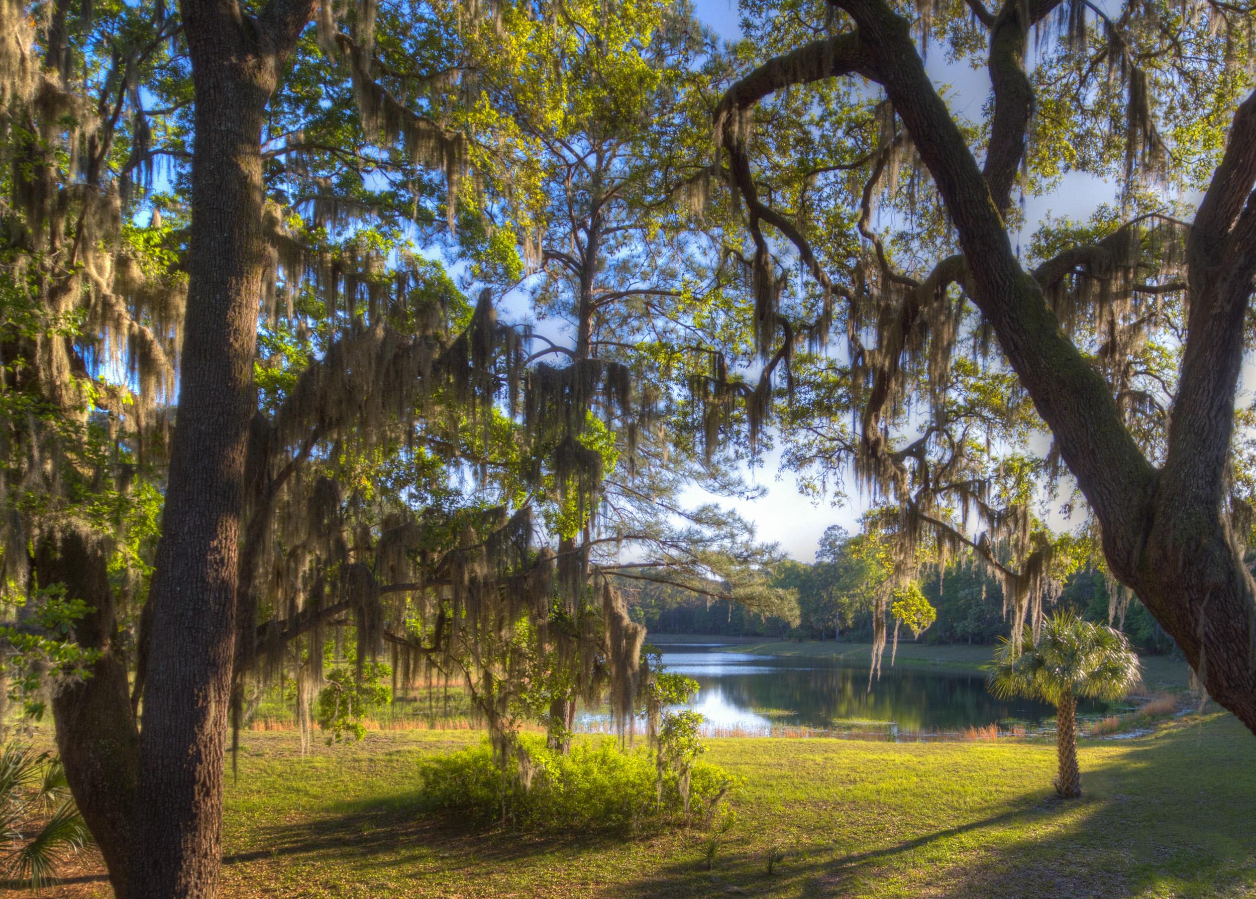 pond-view-tree.jpg