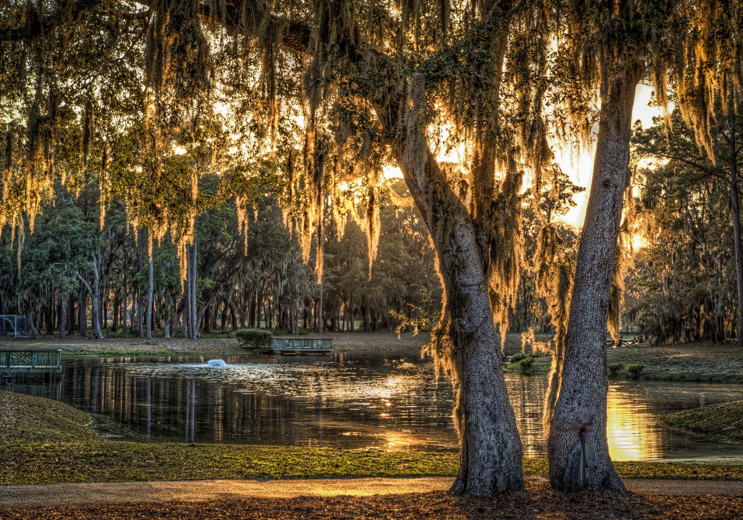 trees-sunset-community-center-pond.jpg