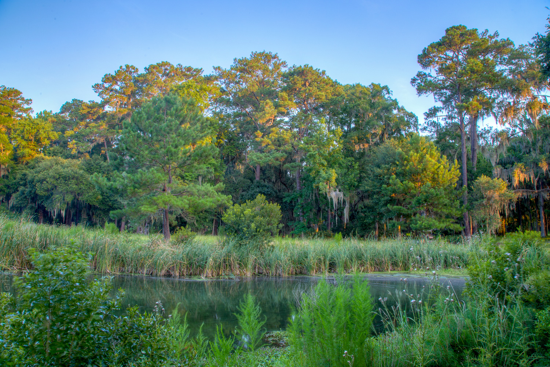 pond-across.jpg