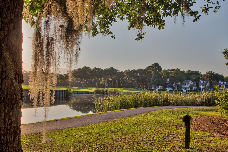 tree-osprey.jpg