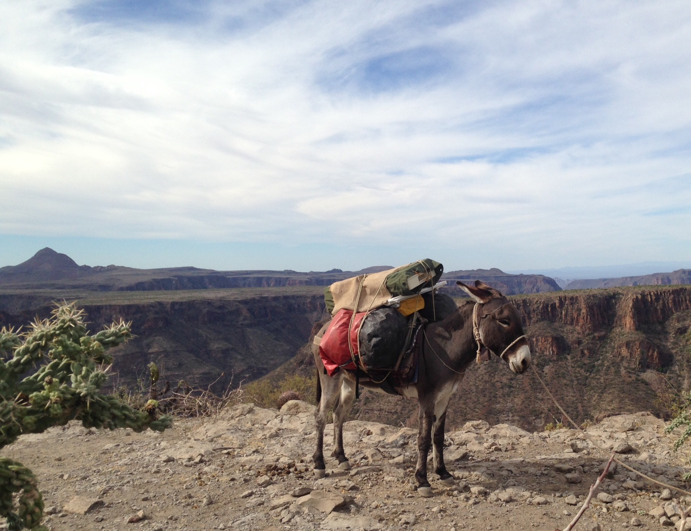 Donkeys carried our supplies down into the canyon