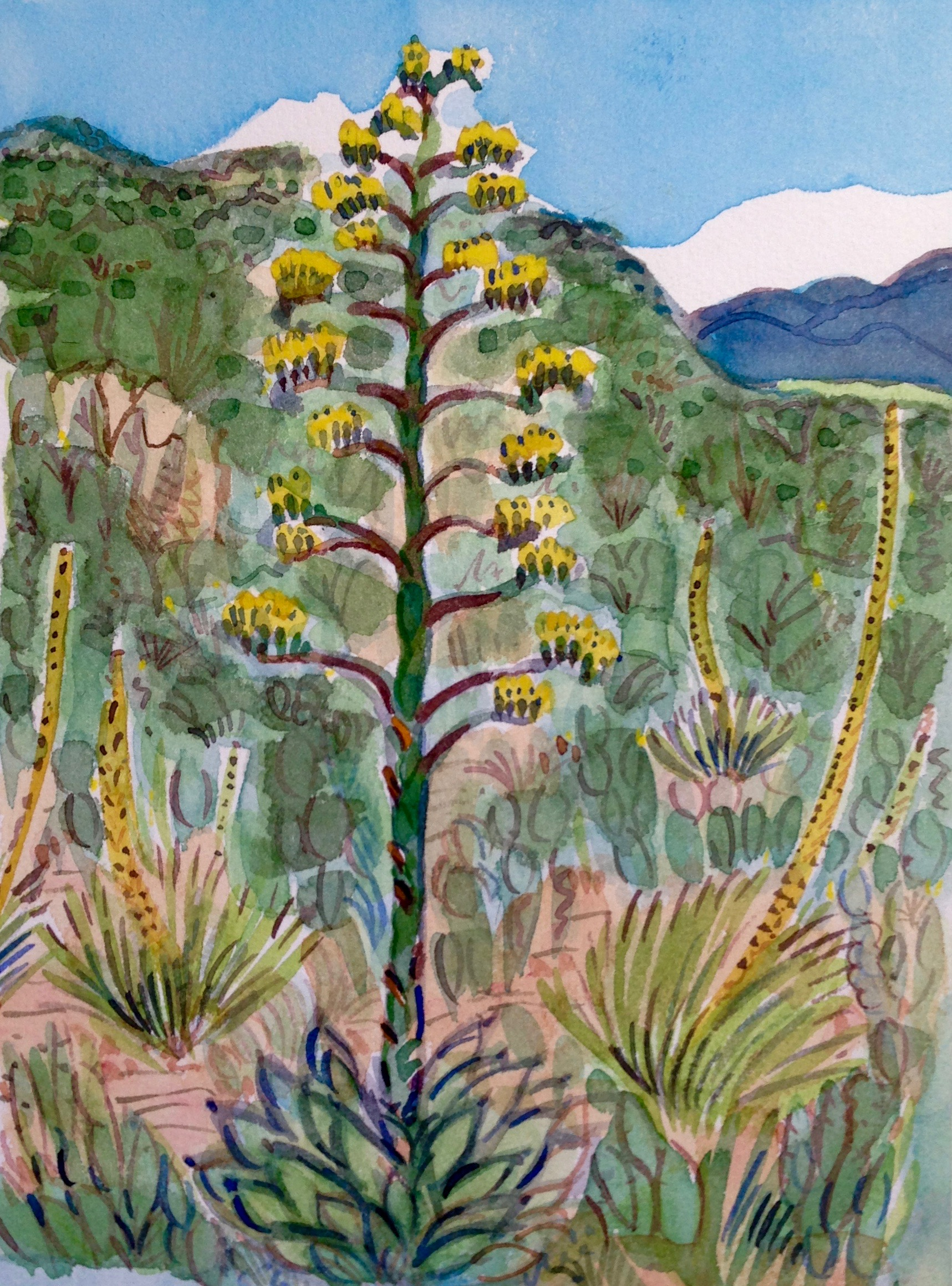 Agave, Mimbres Mountains