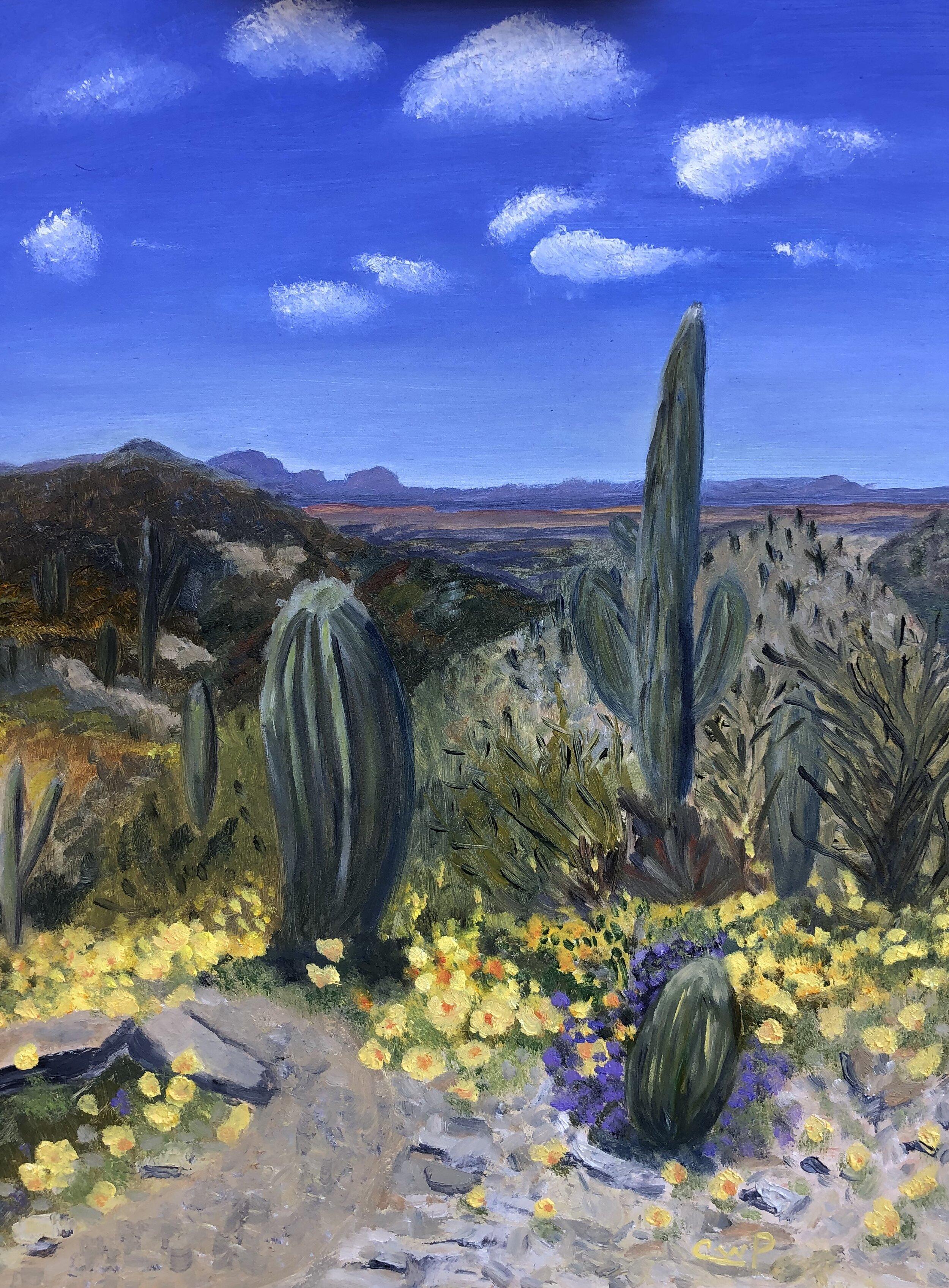 Cinda Pettigrew, Tubac AZ