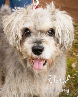 Elwood gets around great on three legs, but we aren't yet sure why it's necessary.