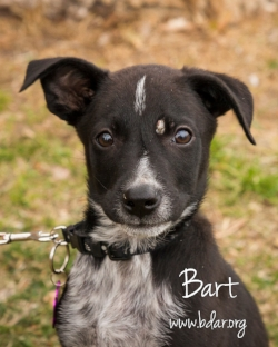 That little spot near his eye is one of the places where Bart is shwoing signs of ringworm, a fungal infection in the skin.