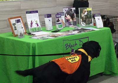 BDAR Dogs_PetSmart.jpg