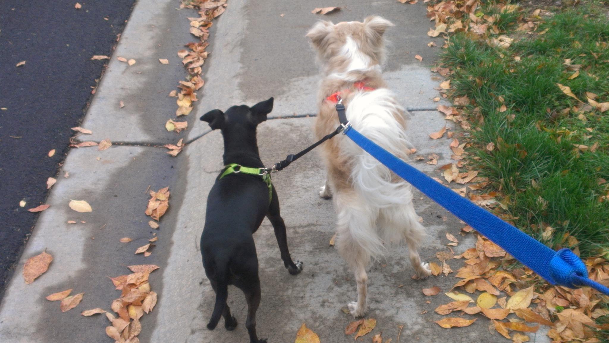 Doobie and Rosie.jpg