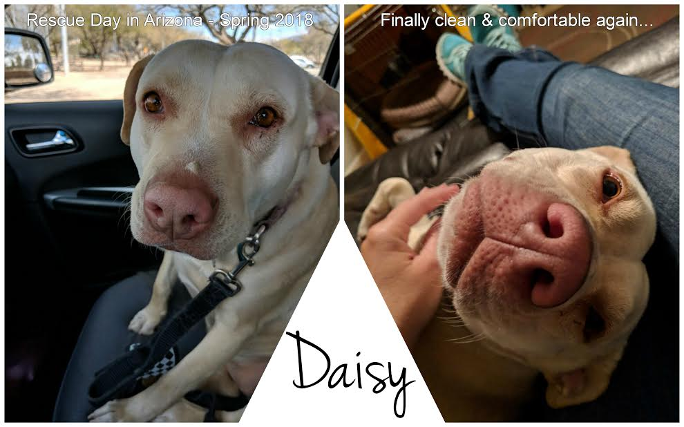 DaisyRescue.jpg